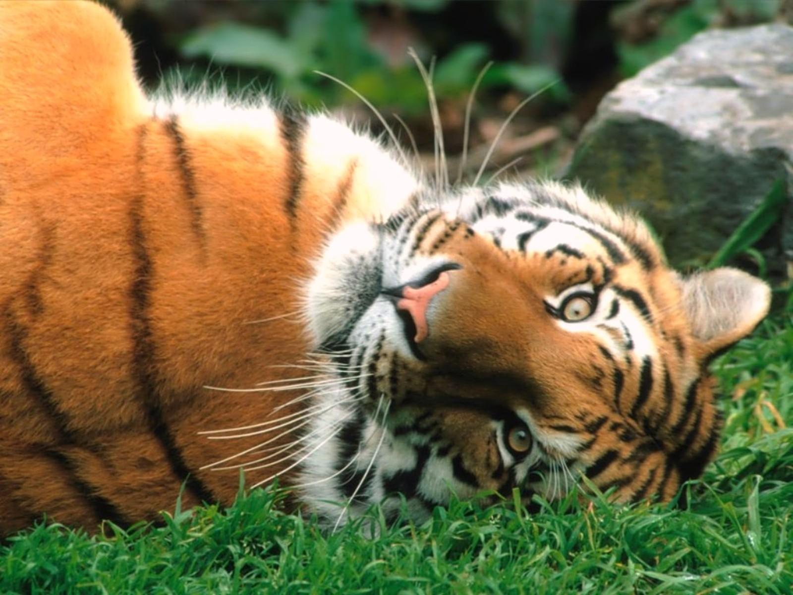 Photo d 39 animaux fond ecran animaux sauvages - Images d animaux sauvages gratuites ...