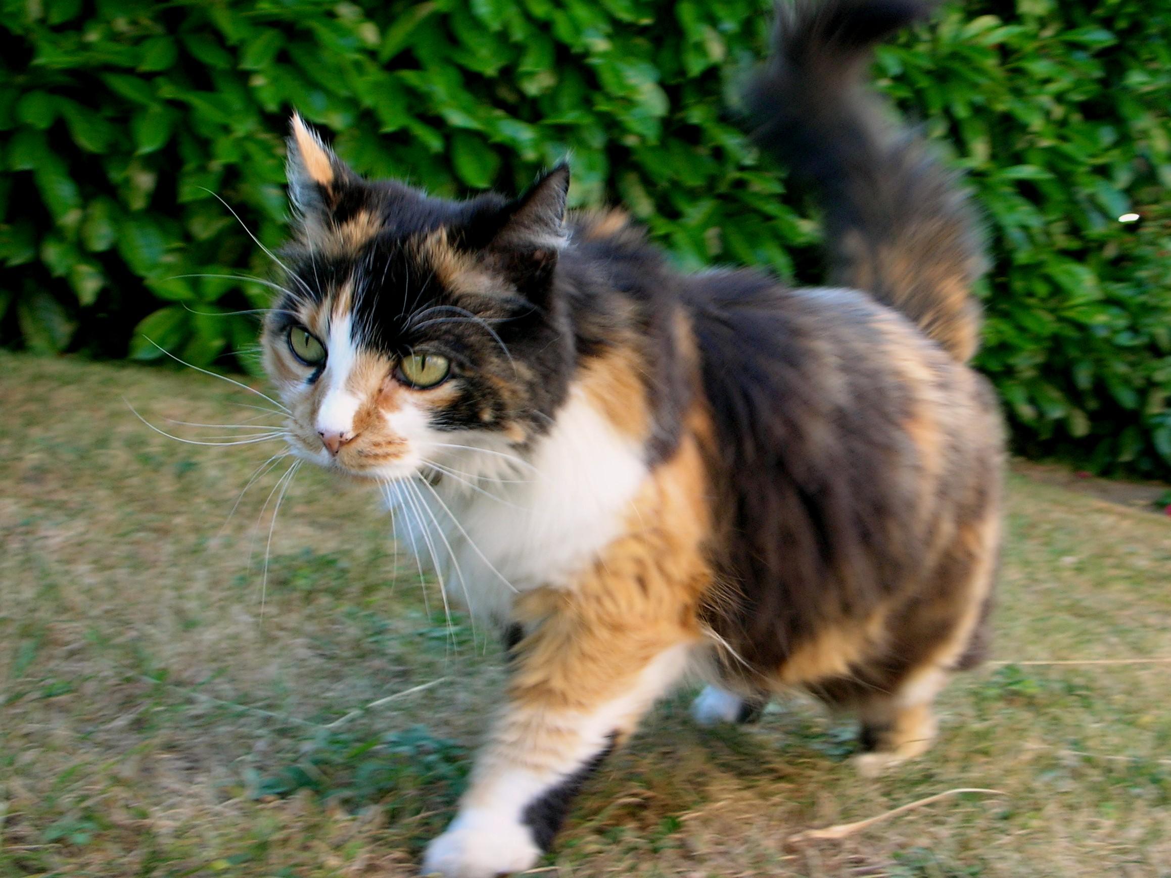 sites de chat gratuit Carcassonne