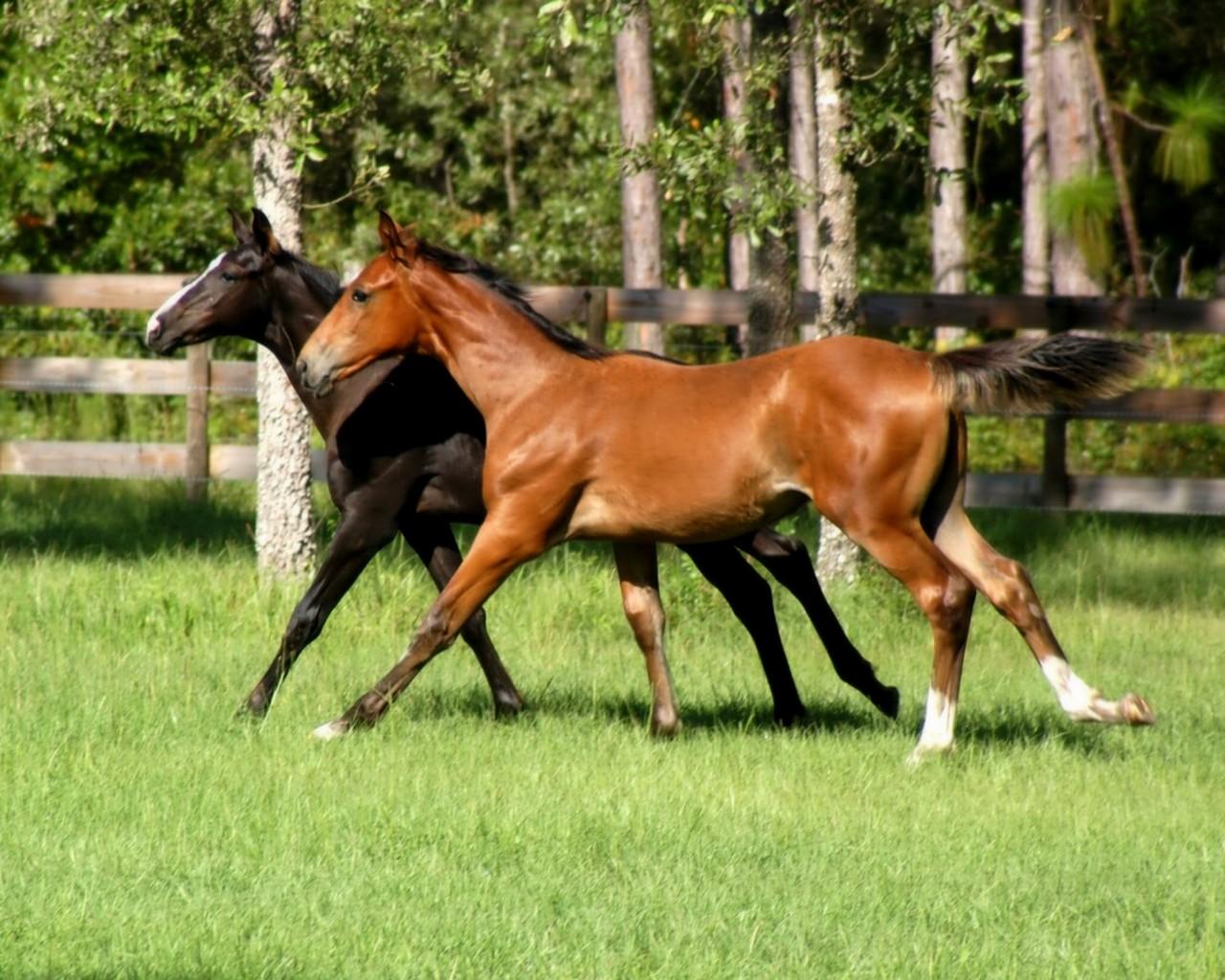 Photo d 39 animaux fond ecran cheval et chevaux - Chevaux gratuits ...