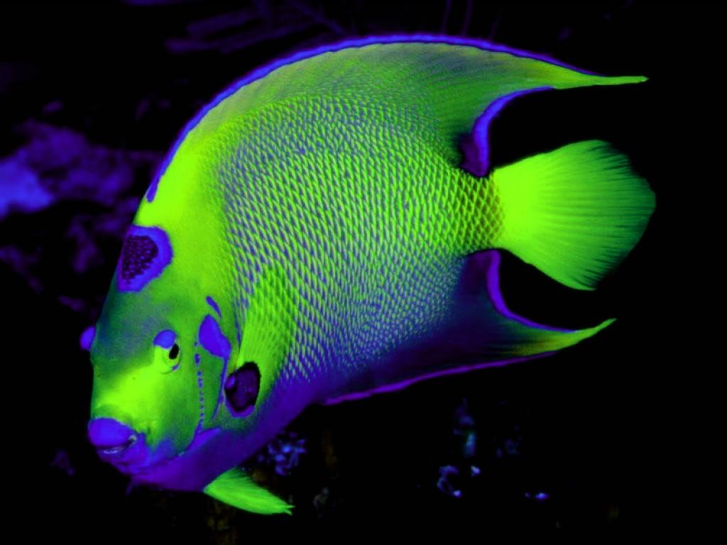 Photo d 39 animaux fond ecran poisson - Image poissons ...